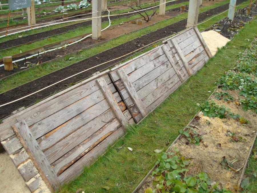 Подготовка и укрытие винограда на зиму | сорта.